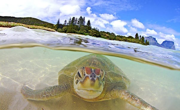 Five Reasons Lord Howe Island Was Named Best Destination