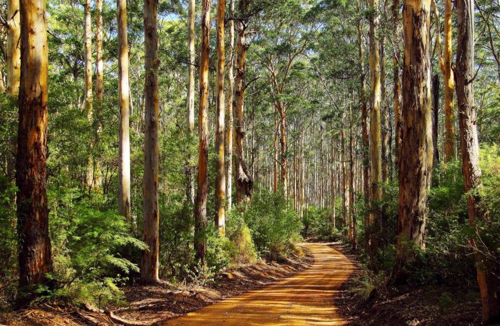 Karri Forrest (large)
